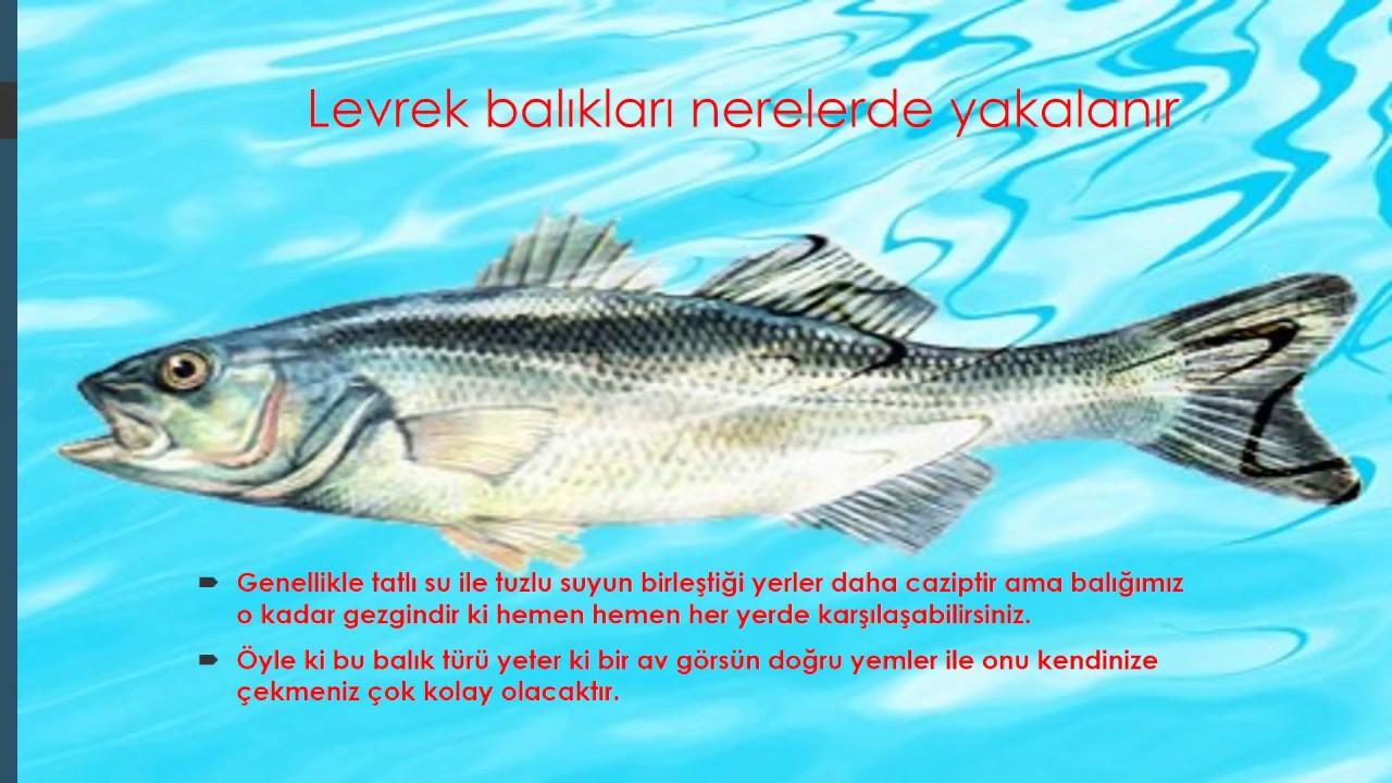 Kefal Nasıl Bir Balık Türüdür