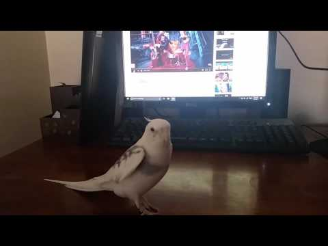 We Are Number One but with Bird