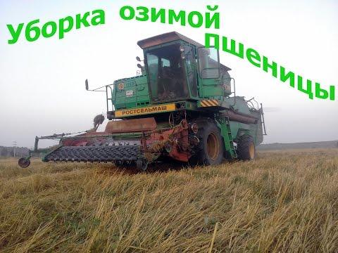Озимая и яровая пшеница »
