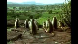 BBC. Живая природа. Звери хулиганят. Animals Behaving Badly.(ВВС о забавных проделках животных. Слоны, обезьяны, птицы, пауки и собаки - они не всегда ведут себя примерно...., 2012-03-29T19:39:47.000Z)