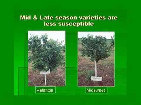 CHRP Video Citrus Canker
