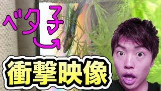 【衝撃映像】同棲生活を始めたベタ子が!!! thumbnail