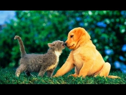 Puppies and Kittens Best Friends Compilation 2015