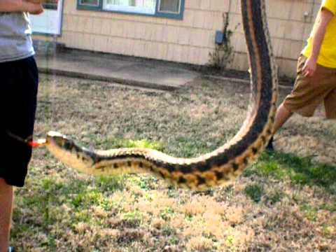 Girl catches snake in back yard!!! - YouTube
