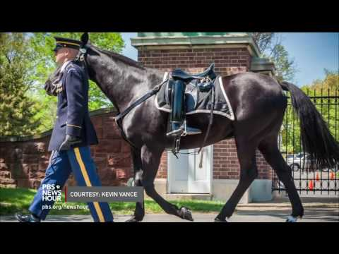 Their duty done, two horses who led funerals at Arlington are given new homes