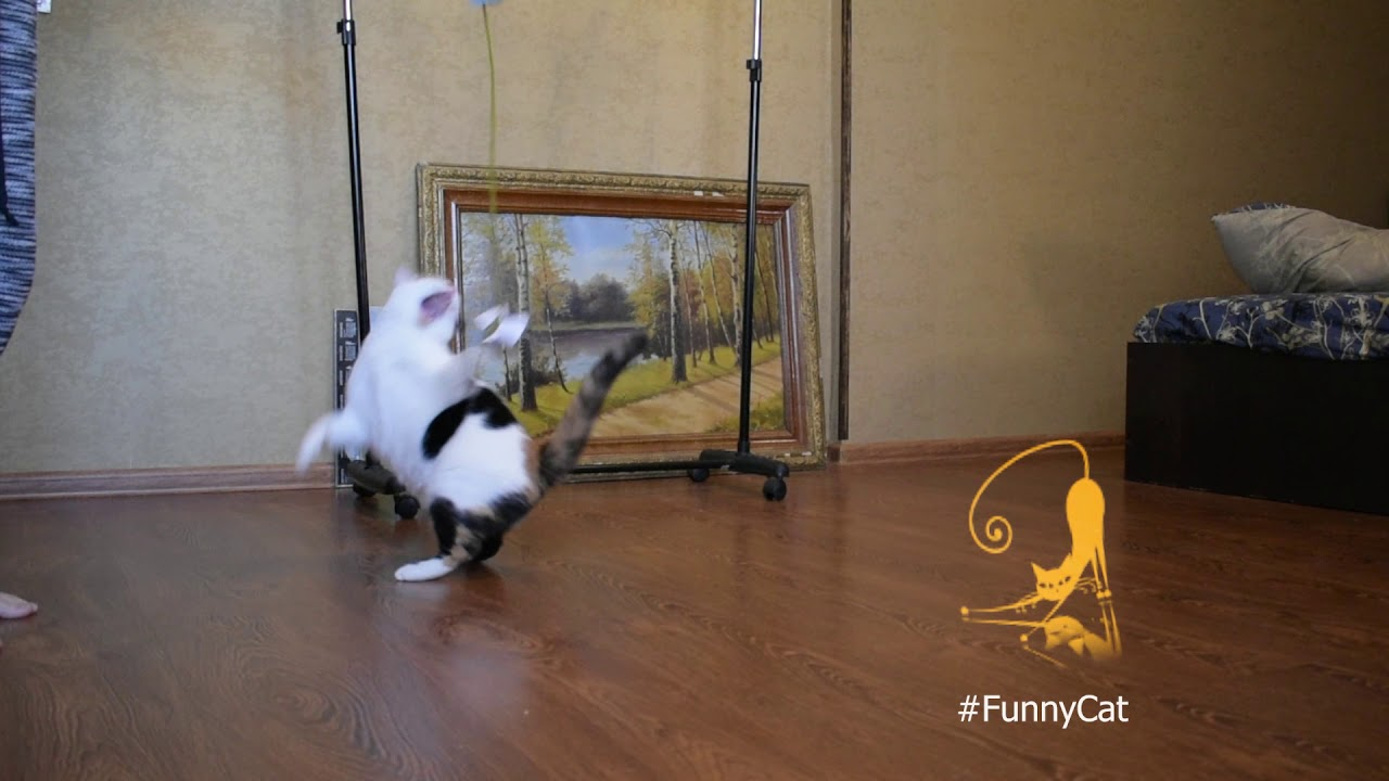 Cat incredible jumps  during the game / Funny Cat_ Youtube