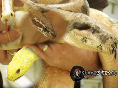 Snake Bytes TV - 5 Nicest Snakes in the World! SnakeBytesTV