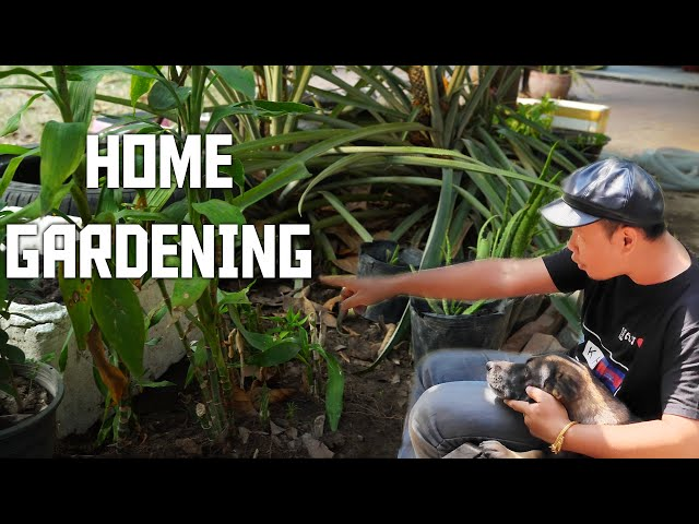Home Gardening Time🍀🍀