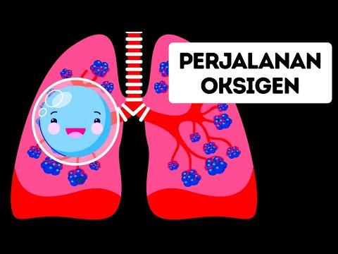 Perjalanan Oksigen di Dalam Tubuh