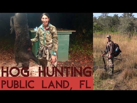 Hog Hunting Adventure, Central Florida, Public Land, DIY