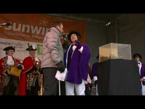 Video: Wiarton Willie makes Groundhog Day prediction