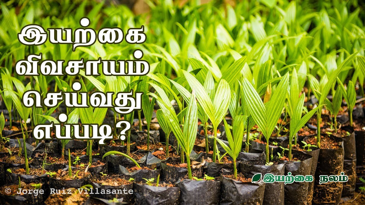 இயற்கை விவசாயம் செய்வது எப்படி?   Organic Farming Tamil  Documentary