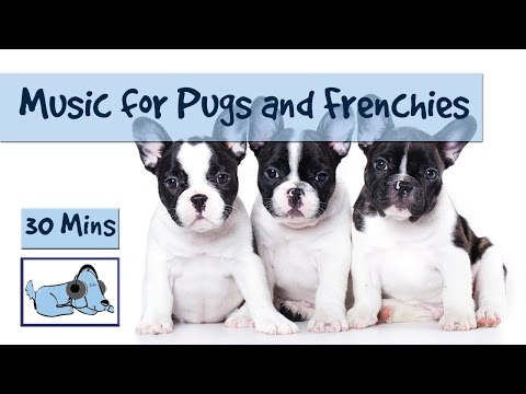 Dog Music for Pugs and French Bulldogs! Perfect Music to Calm Down Flat Nosed Dogs!