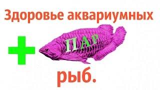 Здоровье аквариумных рыб.