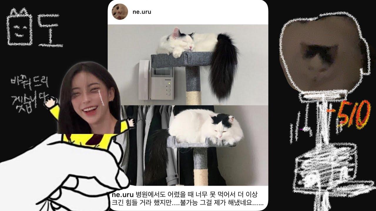 고양이 확대범 김미도 책임감 있게 바꾸기