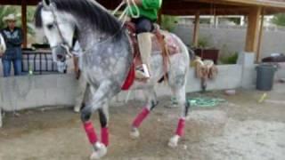 felipe corona bailando el caballo el baliente