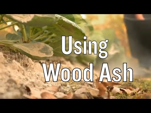 How To Use Wood Ash In The Garden Youtube