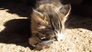котенок ест мышь, кошка принесла мышку
