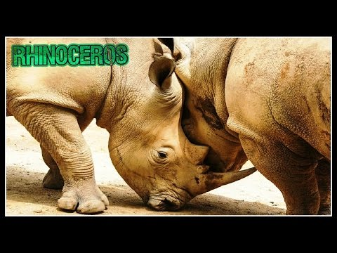 Top 10 Beautiful Moment Of Rhinoceros | Amazing Animals Video(HD)
