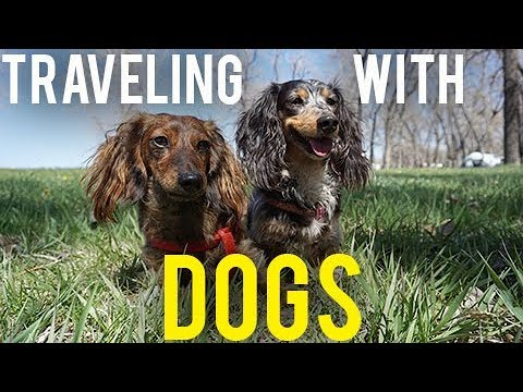 RVING WITH DOGS - TRAVELING FULL TIME🐶