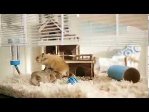 barclays-hamster-advert