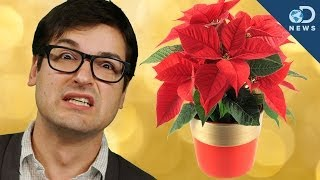 5 Holiday Lies You Believe