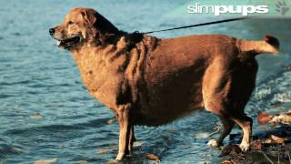 SlimPups (weight-loss program for Dogs!)