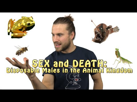 Sex and Death: Disposable Males in the Animal Kingdom
