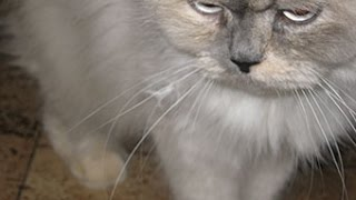 Как избавится от  запаха кошачьей мочи(, 2016-01-16T09:48:13.000Z)