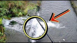 民家の水路で超巨大魚が釣れた!