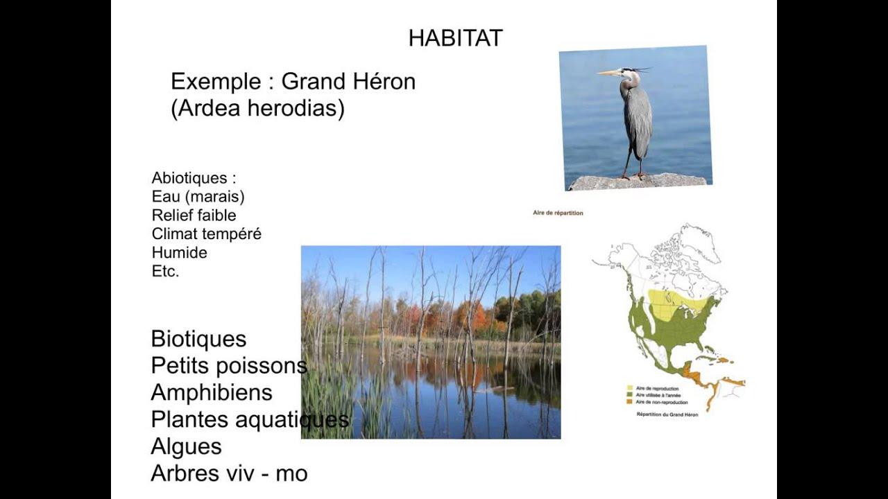 Habitat Et Niche Ecologique