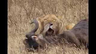 Tanzania - Pictures Ngorongoro Conservation Area