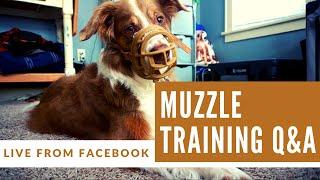 Muzzle Training Q&A | LIVE