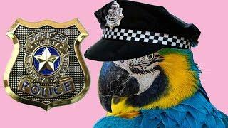6 Преступлений Раскрытых С Помощью Попугаев