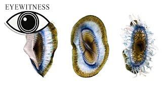EYEWITNESS | Life