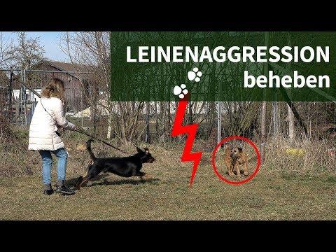 Leinenaggression ► Wie du Leinenaggression beheben kannst ► Praxisvideo