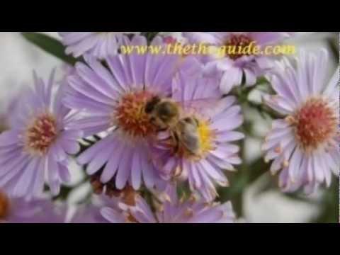 Thethi, Flora & Fauna