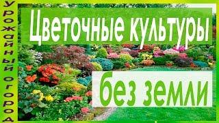 видео Клещевина: сорта, выращивание рассады, уход