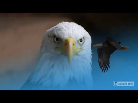 *** 25 Amazing Pictures Of . . . . . . . . . . Eagles! ***