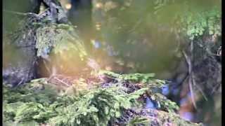Гармония человека и природы Философия природы
