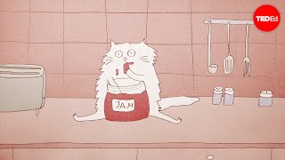 ทำไมแมวถึงชอบทำอะไรแปลก ๆ - Tony Buffington