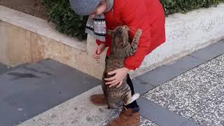 Stray kitten asking for hands / Бездомный котёнок просится на руки / Заберите меня домой