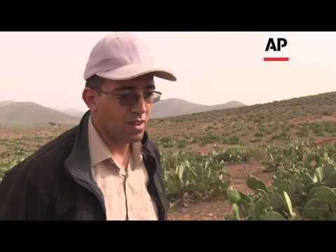 Farmers bid to increase Moroccan Fig Oil production