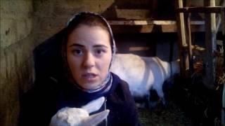 Сколько сена ест коза и овца.