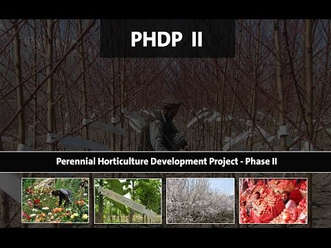 PHDP II - The foundation of modern and sustainable horticulture in Afghanistan