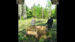 Fox Fire Sled Construction and Lippitt Morgan Horse