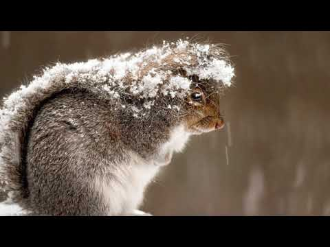 Вопрос: Для чего животным хвост?
