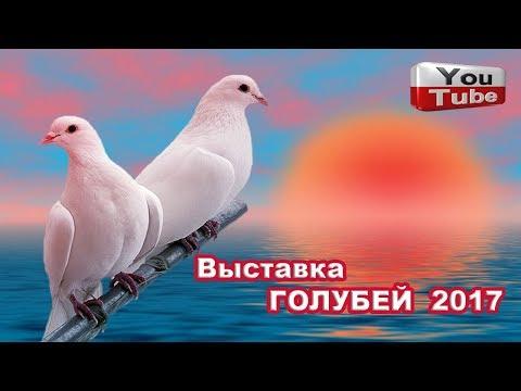 Выставка ГОЛУБЕЙ 2017г. г.Курганинск