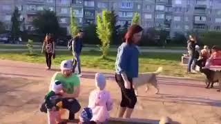 В Космодемьянском из-за жалоб местных жителей отловили собак с жёлтыми бирками