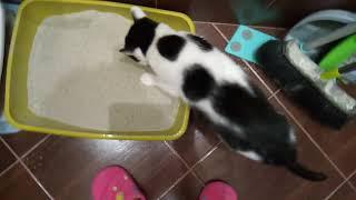 Как приучать кошку к закрытому лотку? Кошечка Элла и новый лоток